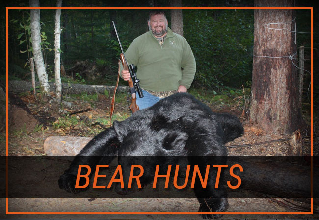 Bear Hunts with Rainy Lake Outfitters Inc.