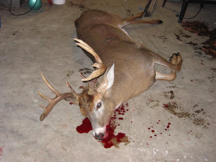Rainy Lake Outfitters Inc. - Deer Hunts Photo 162