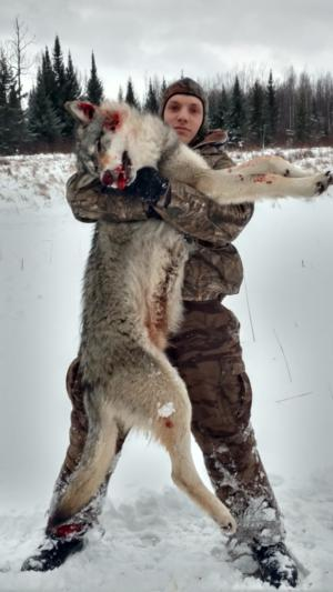 Guided Wolf Hunts In Ontario Rainy Lake Outfitters Inc
